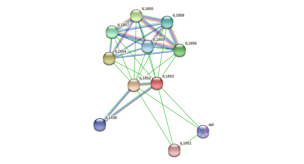 IL1853 protein (Idiomarina loihiensis) - STRING interaction network