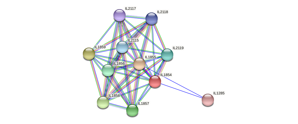 IL1854 protein (Idiomarina loihiensis) - STRING interaction network