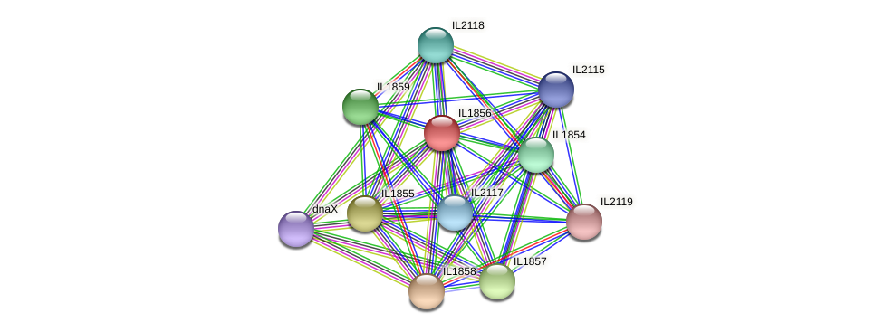 IL1856 protein (Idiomarina loihiensis) - STRING interaction network