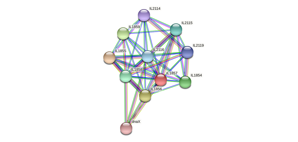 IL1857 protein (Idiomarina loihiensis) - STRING interaction network