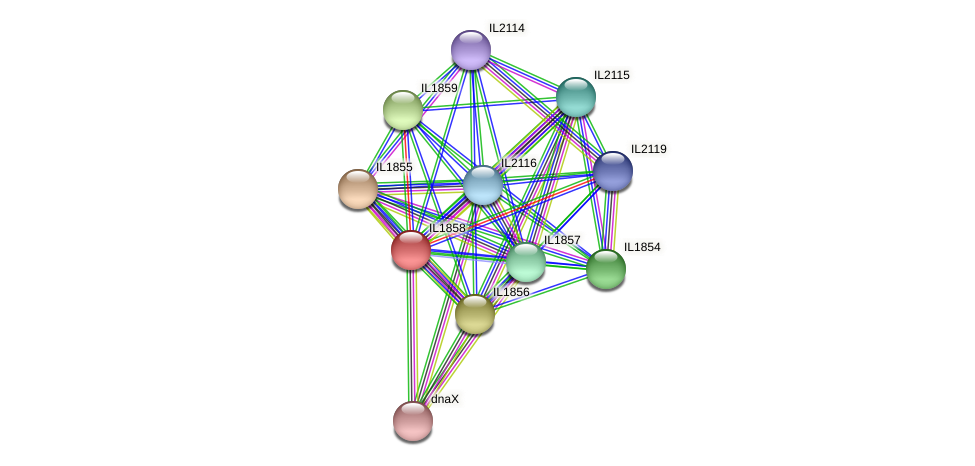 IL1858 protein (Idiomarina loihiensis) - STRING interaction network