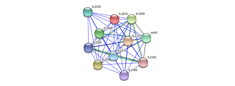 IL1875 protein (Idiomarina loihiensis) - STRING interaction network