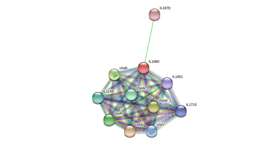 IL1880 protein (Idiomarina loihiensis) - STRING interaction network