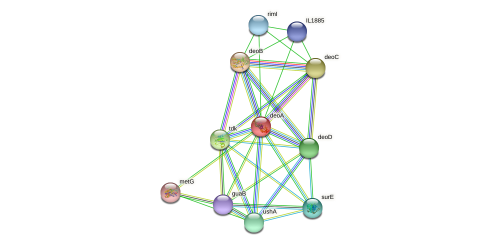 deoA protein (Idiomarina loihiensis) - STRING interaction network