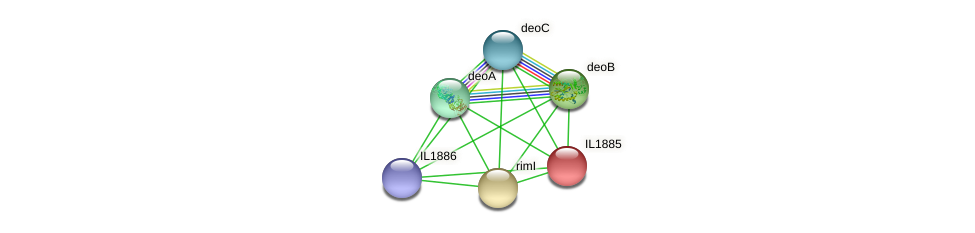 IL1885 protein (Idiomarina loihiensis) - STRING interaction network