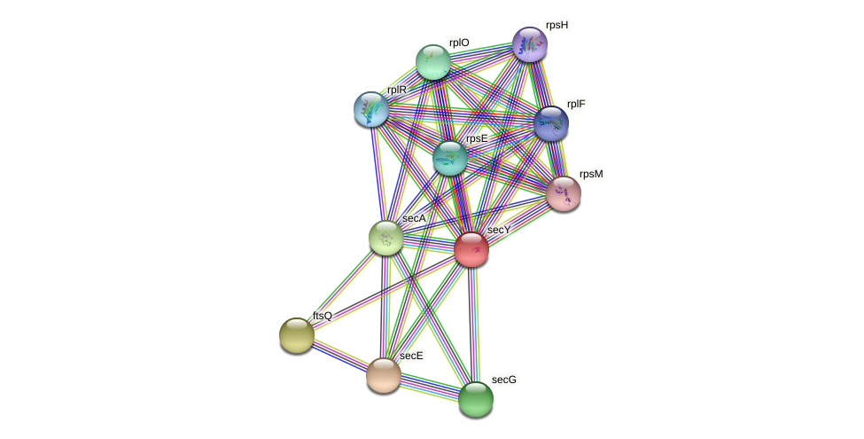 secY protein (Idiomarina loihiensis) - STRING interaction network