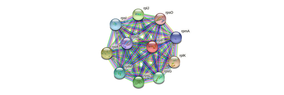 rplF protein (Idiomarina loihiensis) - STRING interaction network