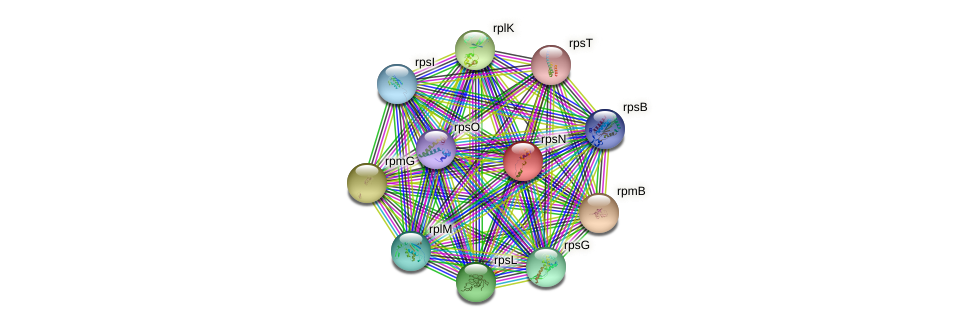 rpsN protein (Idiomarina loihiensis) - STRING interaction network