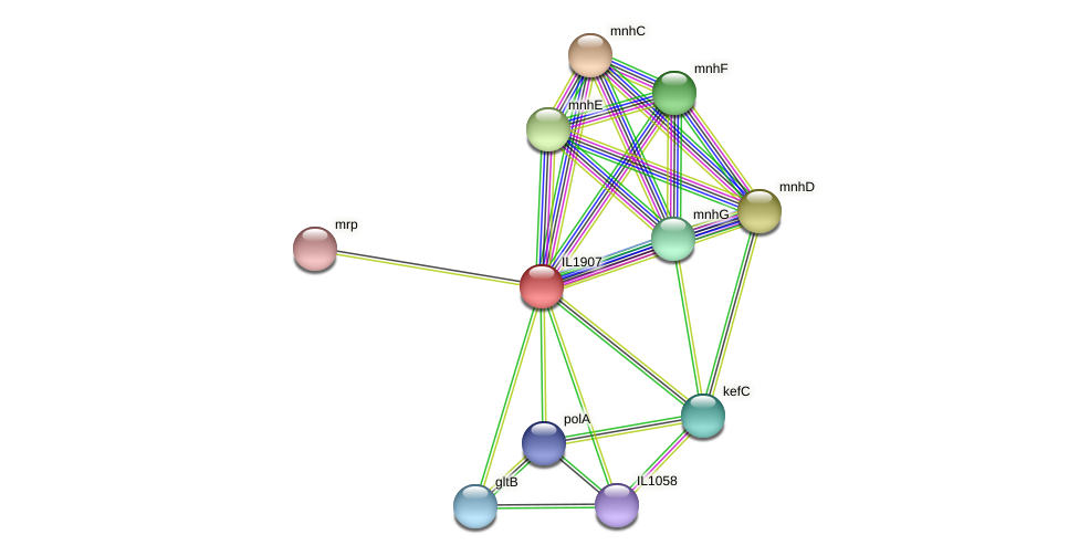 IL1907 protein (Idiomarina loihiensis) - STRING interaction network