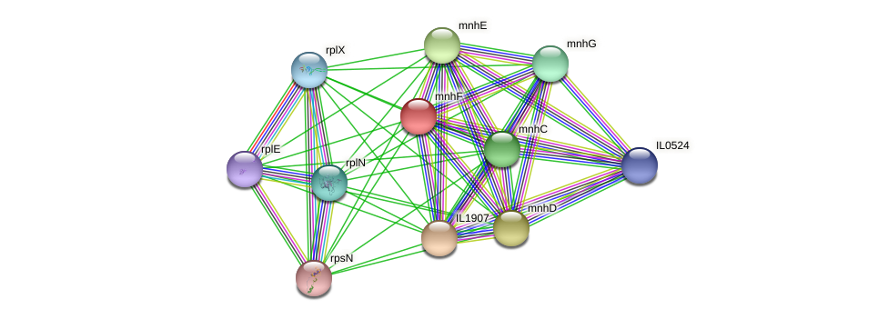 mnhF protein (Idiomarina loihiensis) - STRING interaction network