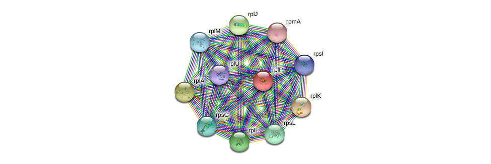 rplP protein (Idiomarina loihiensis) - STRING interaction network