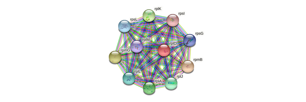 rplD protein (Idiomarina loihiensis) - STRING interaction network