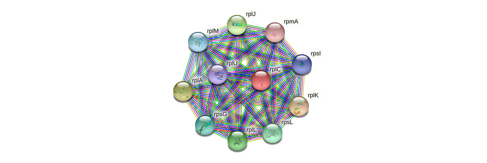 rplC protein (Idiomarina loihiensis) - STRING interaction network