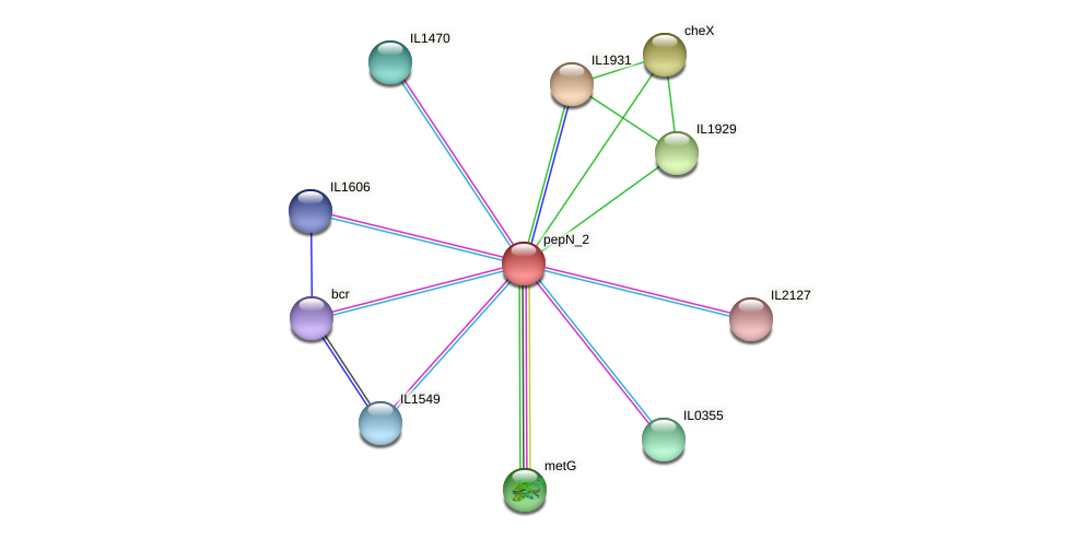 IL1930 protein (Idiomarina loihiensis) - STRING interaction network