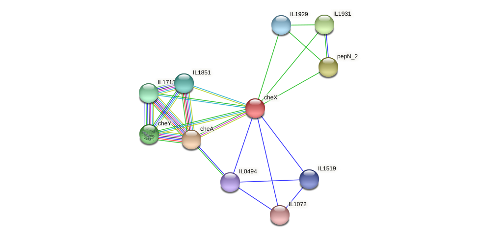 cheX protein (Idiomarina loihiensis) - STRING interaction network