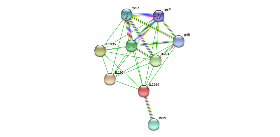 IL1936 protein (Idiomarina loihiensis) - STRING interaction network