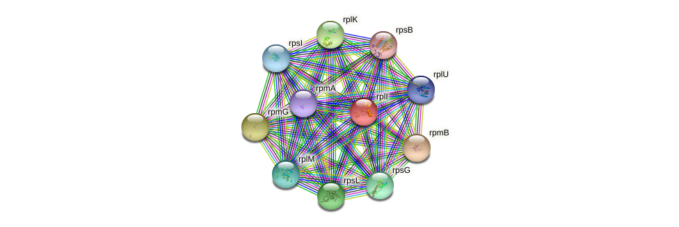 rplI protein (Idiomarina loihiensis) - STRING interaction network