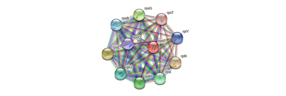 rpsF protein (Idiomarina loihiensis) - STRING interaction network