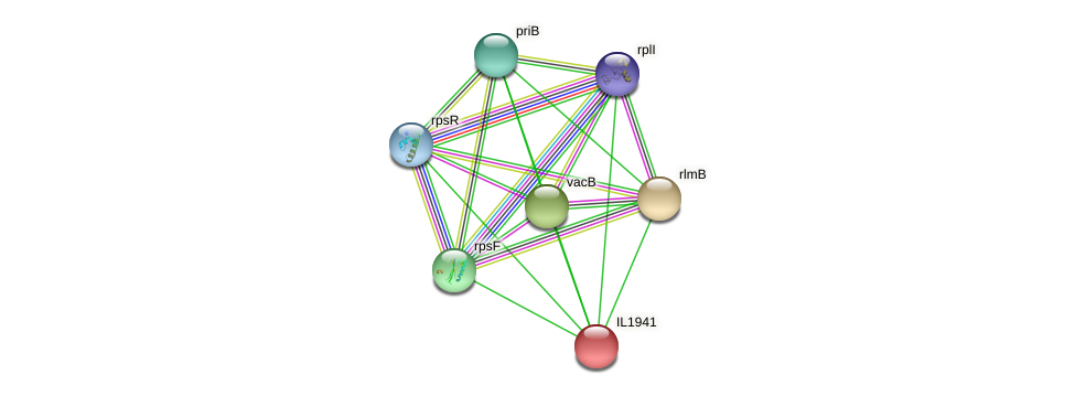 IL1941 protein (Idiomarina loihiensis) - STRING interaction network