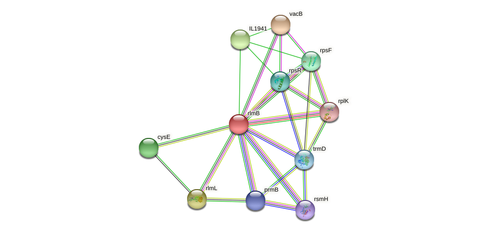 rlmB protein (Idiomarina loihiensis) - STRING interaction network