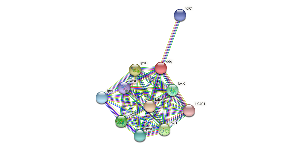 ddg protein (Idiomarina loihiensis) - STRING interaction network