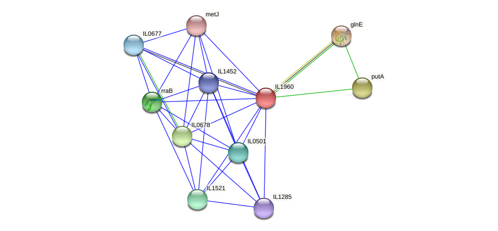 IL1960 protein (Idiomarina loihiensis) - STRING interaction network