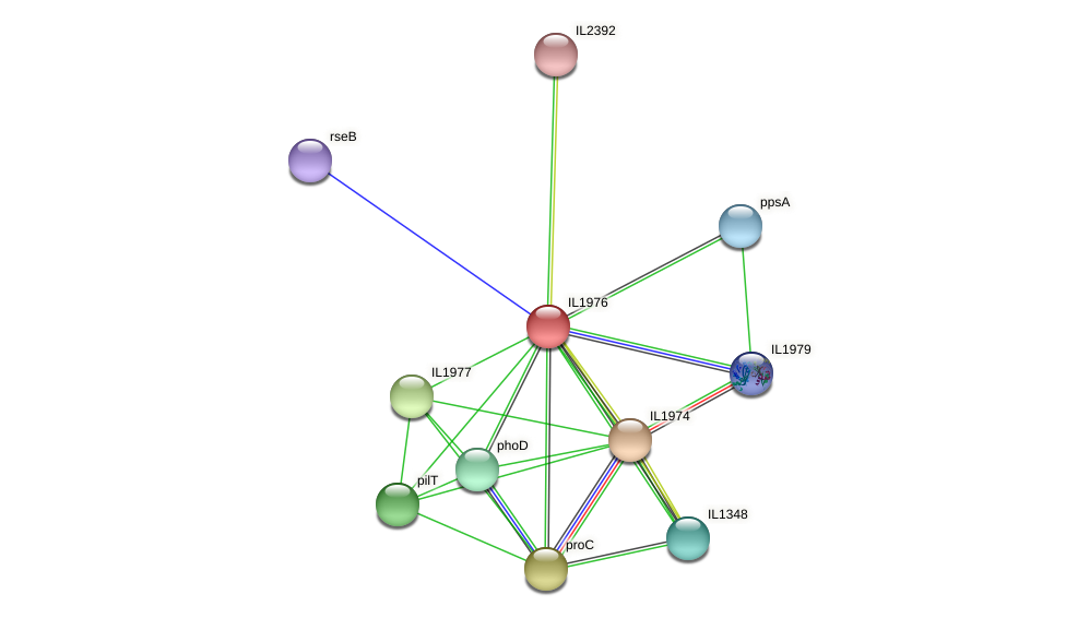 IL1976 protein (Idiomarina loihiensis) - STRING interaction network