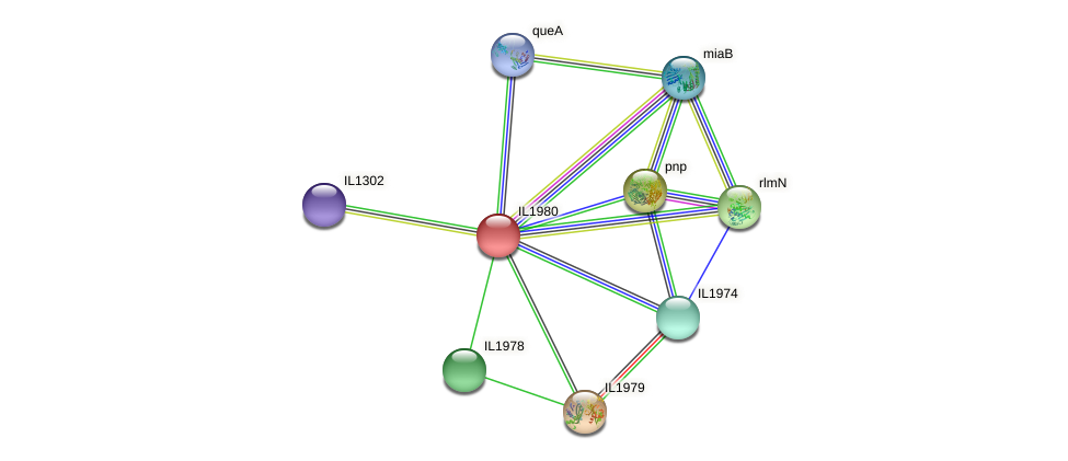IL1980 protein (Idiomarina loihiensis) - STRING interaction network