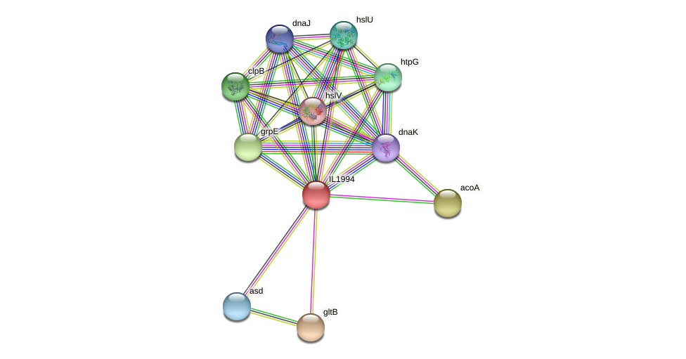 IL1994 protein (Idiomarina loihiensis) - STRING interaction network