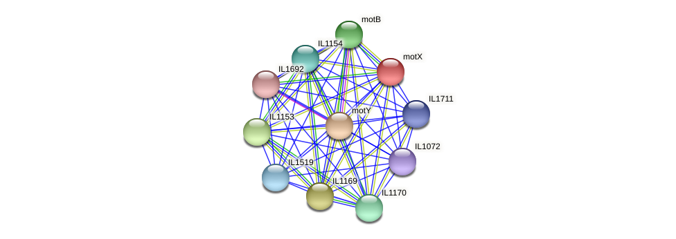 motX protein (Idiomarina loihiensis) - STRING interaction network
