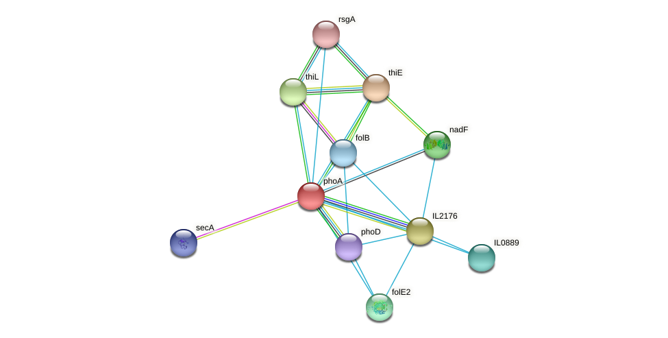 phoA protein (Idiomarina loihiensis) - STRING interaction network