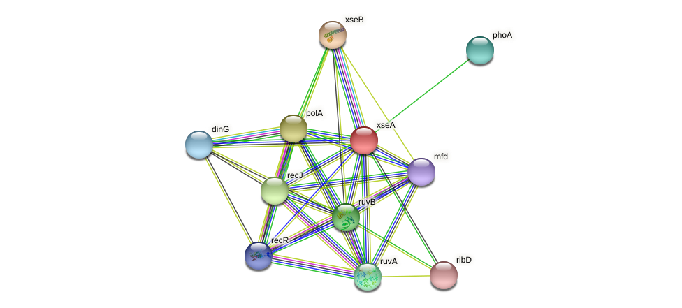 xseA protein (Idiomarina loihiensis) - STRING interaction network