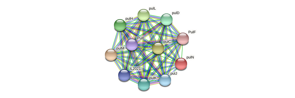 pulN protein (Idiomarina loihiensis) - STRING interaction network