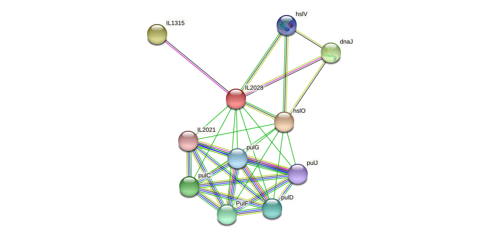 IL2028 protein (Idiomarina loihiensis) - STRING interaction network