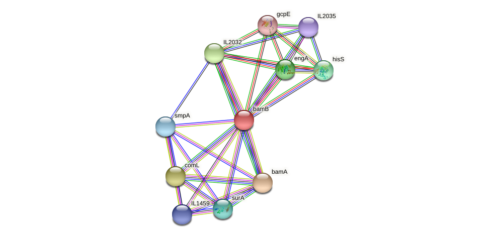 bamB protein (Idiomarina loihiensis) - STRING interaction network