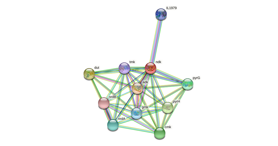 ndk protein (Idiomarina loihiensis) - STRING interaction network
