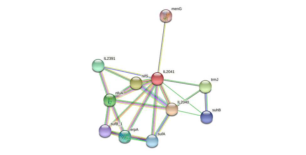 IL2041 protein (Idiomarina loihiensis) - STRING interaction network