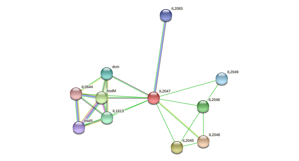 IL2047 protein (Idiomarina loihiensis) - STRING interaction network