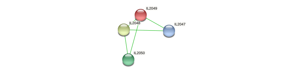 IL2049 protein (Idiomarina loihiensis) - STRING interaction network