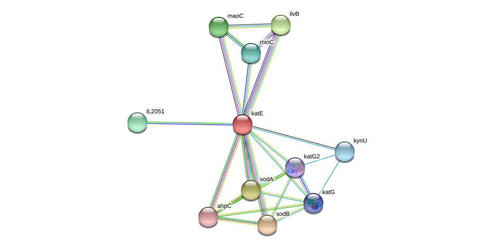 katE protein (Idiomarina loihiensis) - STRING interaction network