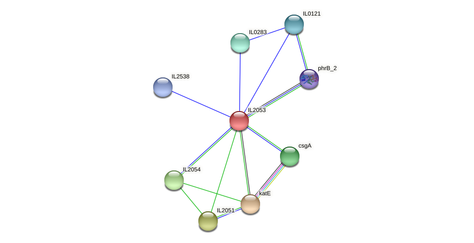 IL2053 protein (Idiomarina loihiensis) - STRING interaction network