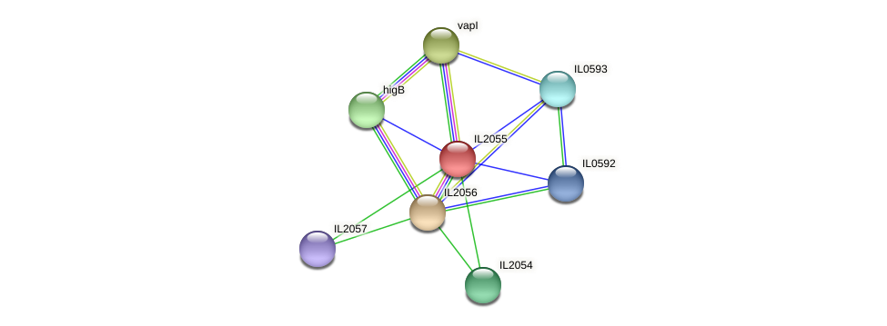 IL2055 protein (Idiomarina loihiensis) - STRING interaction network