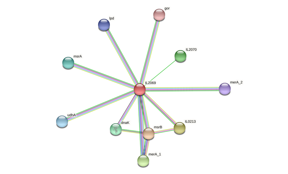 IL2069 protein (Idiomarina loihiensis) - STRING interaction network