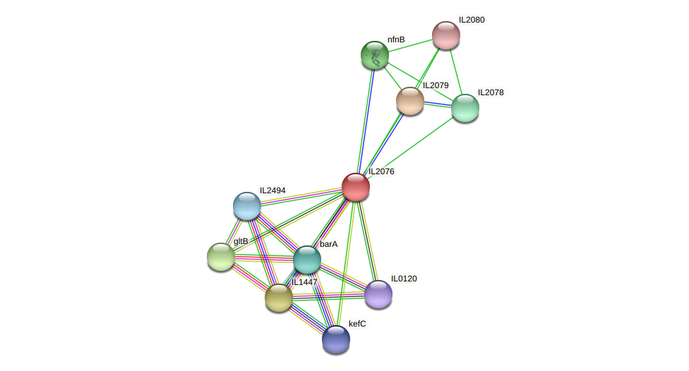IL2076 protein (Idiomarina loihiensis) - STRING interaction network