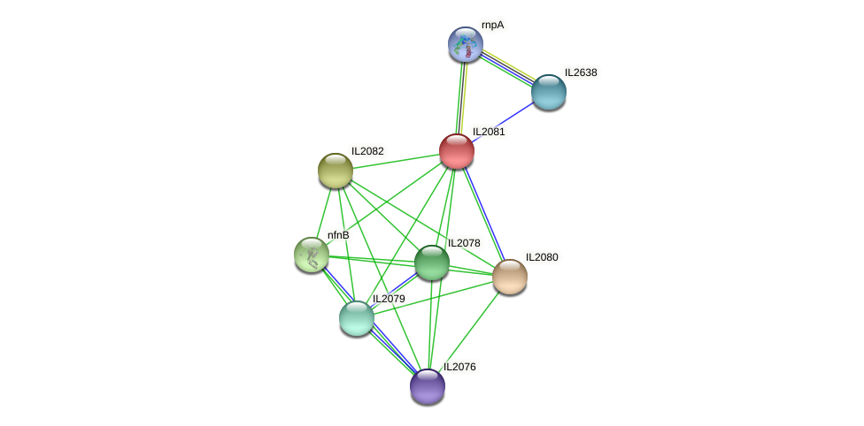 IL2081 protein (Idiomarina loihiensis) - STRING interaction network