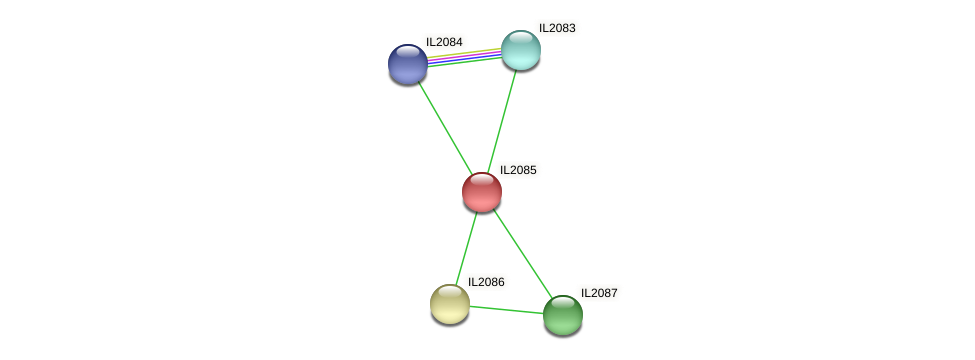 IL2085 protein (Idiomarina loihiensis) - STRING interaction network