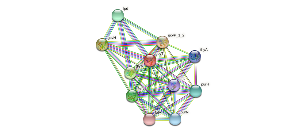 gcvT protein (Idiomarina loihiensis) - STRING interaction network