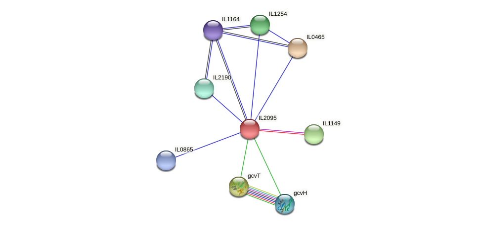 IL2095 protein (Idiomarina loihiensis) - STRING interaction network
