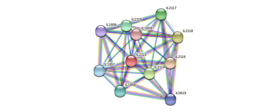 IL2115 protein (Idiomarina loihiensis) - STRING interaction network