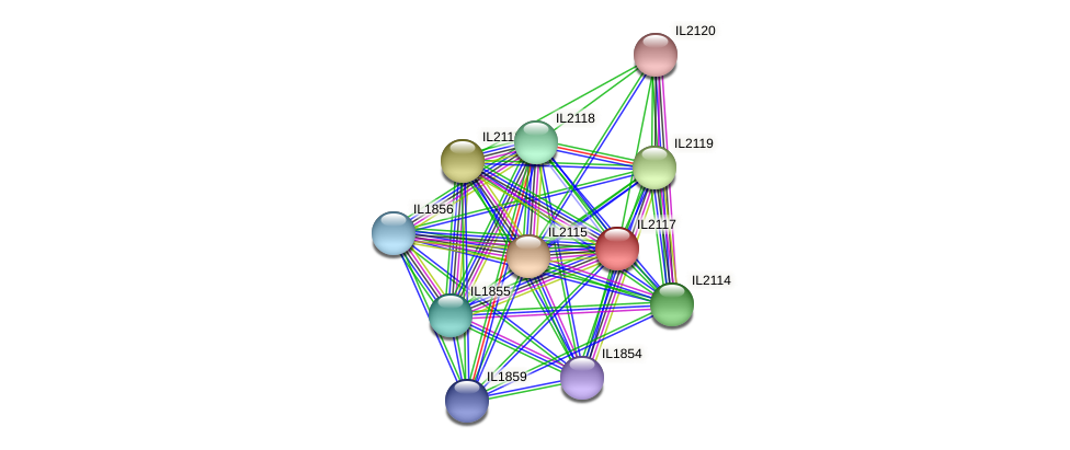 IL2117 protein (Idiomarina loihiensis) - STRING interaction network